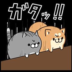 LINE LIVE×ボンレス犬&猫コラボ