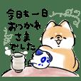 Shiba Inu Dog <Consideration>