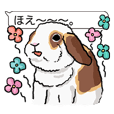 Feelings of Holland Lop Rabbit