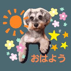 Tsubasa_20191130223726