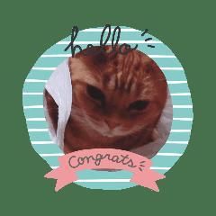猫達 asuka&KINAKO