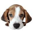 Yoho Beagle