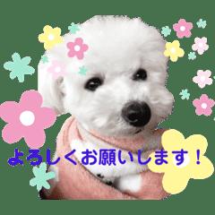 広報犬ここちゃん PART2
