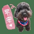Emma dogdog