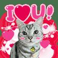 猫界の小覇者!MIKIの日常生活