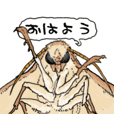 I love moth!
