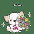 シーズー犬のカスタムスタンプVol.2