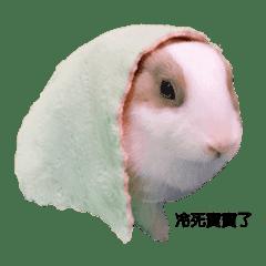 Bunny Ban Ban