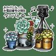 スチパン鉢+多肉植物1-feat.yussi