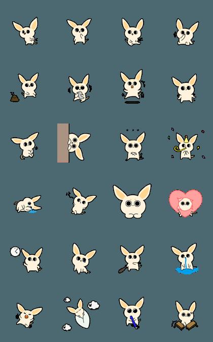 Large-eyed desert fox 'Morae'