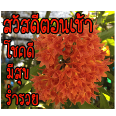 ทักทายดอกไม้ v.2