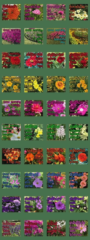 「Greeting Blooming v.2」のLINEスタンプ一覧