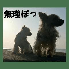 大阪弁ヨーキー        オレヒリあたちピチ