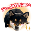 Japanese dog Kuroshiba's daily life
