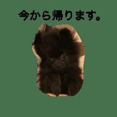 石井ポン&プー