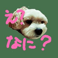 愛犬メイの日常2