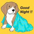 Cute Little Beagle