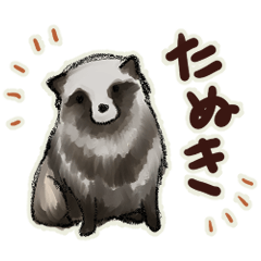 cute round raccoon dog