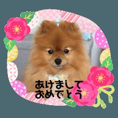 Pomeranian no mocochan_reiwa new year