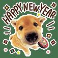 THE DOG 新年ごあいさつ