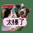 Cats TNR 2
