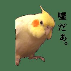 疑い深い鳥さん達