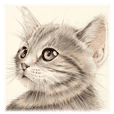A capricious cat