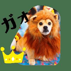 凛太郎スタンプ(ダックス✖️ペキニーズ )
