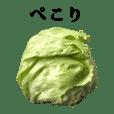 reatasu lettuce 2