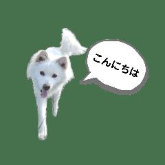 犬の通常用と年末年始のスタンプ