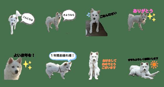 「犬の通常用と年末年始のスタンプ」のLINEスタンプ一覧