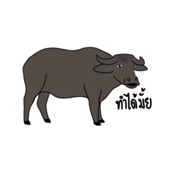 Buffalo with midterm