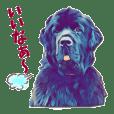 Newfoubdlanddog Suzy