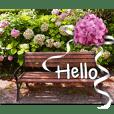 Hello Flowers Photos