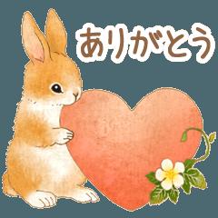 Fields and mountain animals (rabbit)