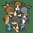 ガリガリわんこ☆祭り!