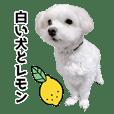 白い犬とレモン
