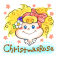 Christmas Rose.