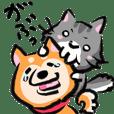 きゃわわ!柴犬とネコ!