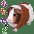Life of the marmot