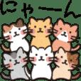 6にゃん子猫