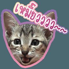 Mayu's cat