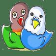 Poe copy of lovebird and budgerigar