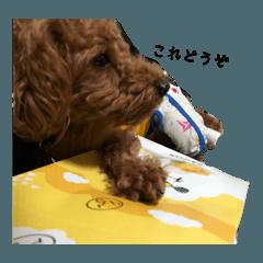 犬の日常〜一丸〜