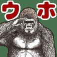 Gorilla gorilla gorilla Best