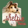 Sheltie Venus