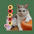 Familiaの猫スタンプ