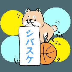 SHIBASUKE of Shiba