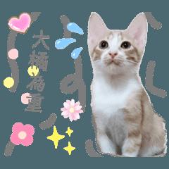 cherry cat baby