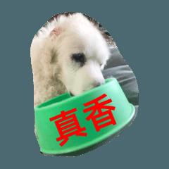 大白熊生活日記1